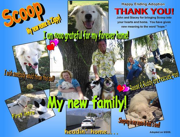 Dog Adoption Collages